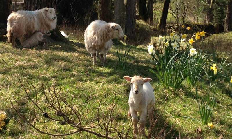 Brecon Beacons Spring Time